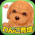 掌心小狗中文汉化版 v3.9.5
